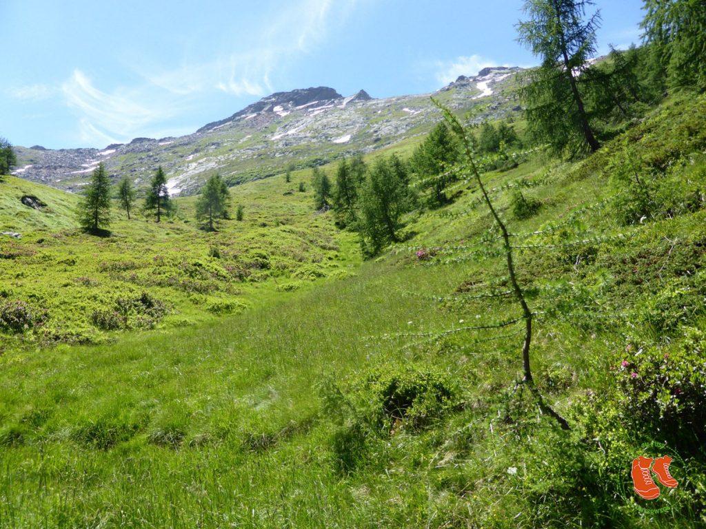 Grün tut uns gut! Zu Fuss unterwegs in der Natur! in den Bergen.