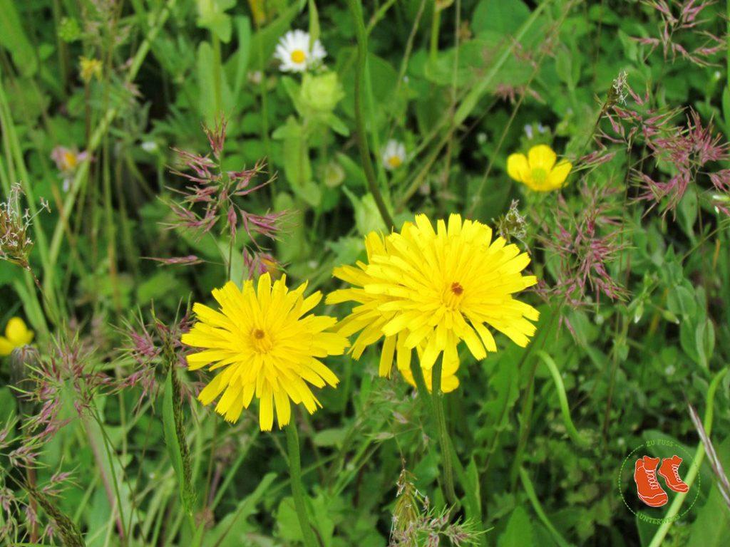 Grün tut uns gut! Zu Fuss unterwegs in der Natur. Gesundheit, Blumen, Erholung.