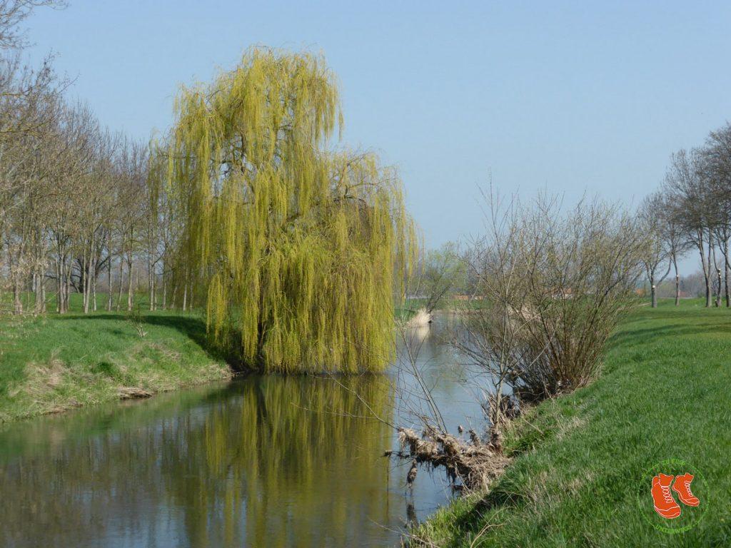 Grün tut uns gut! Zu Fuss unterwegs in der Natur. Am Fluss.