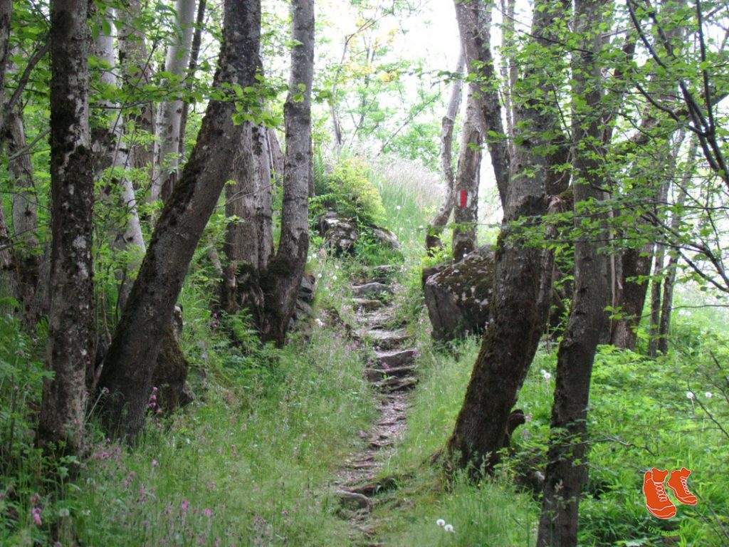 Grün tut uns gut! Zu Fuss unterwegs in der Natur. Im Wald.
