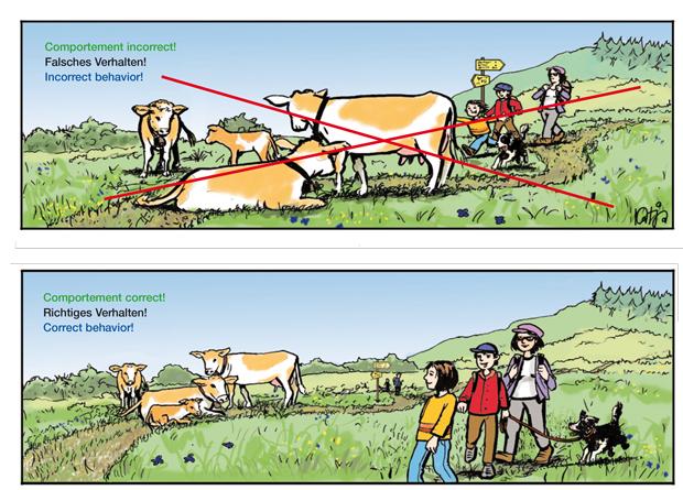 Mutterkühe und Hütehunde: zu Fuss unterwegs; wandern