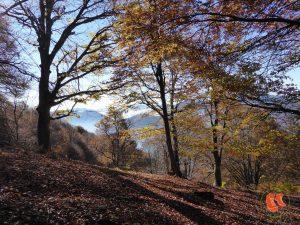 Waldbaden – oder was Bäume für deine Gesundheit tun