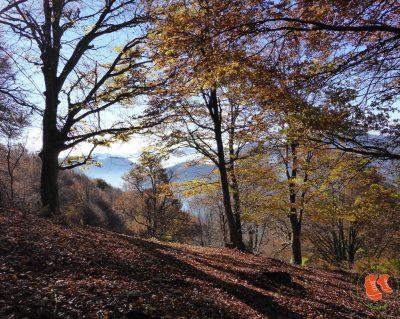 Waldbaden - oder was Bäume für deine Gesundheit tun