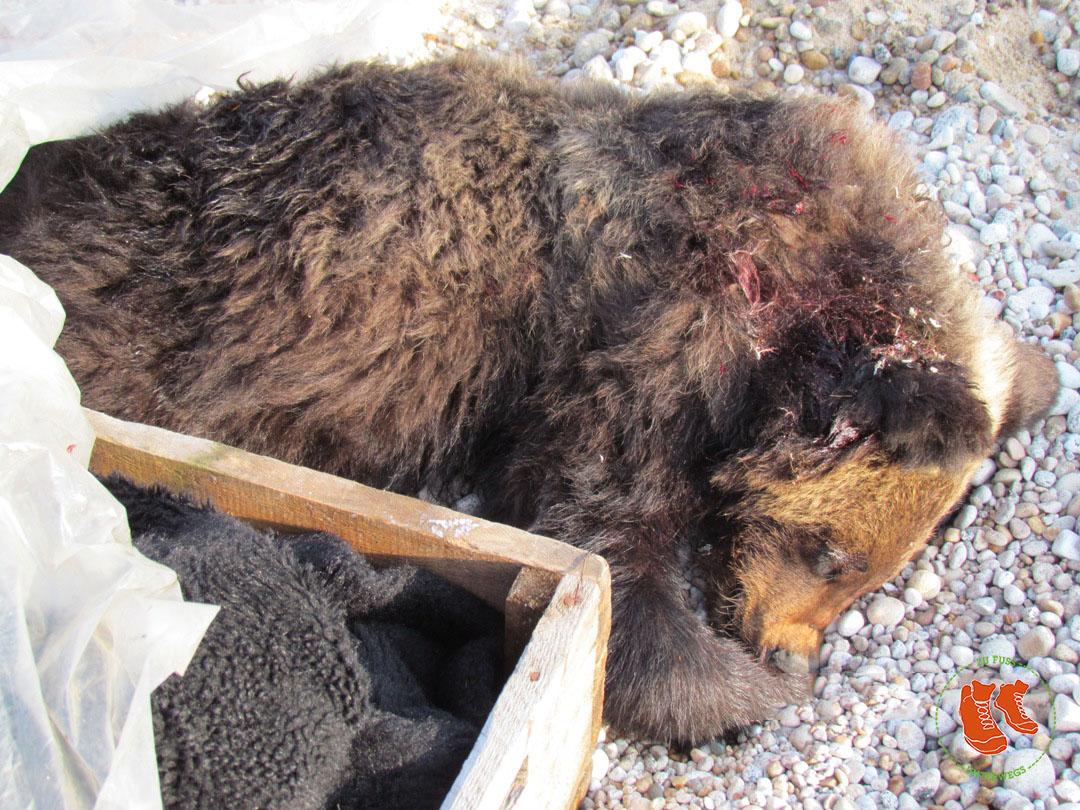Baikalsee - der kleine tote Bär