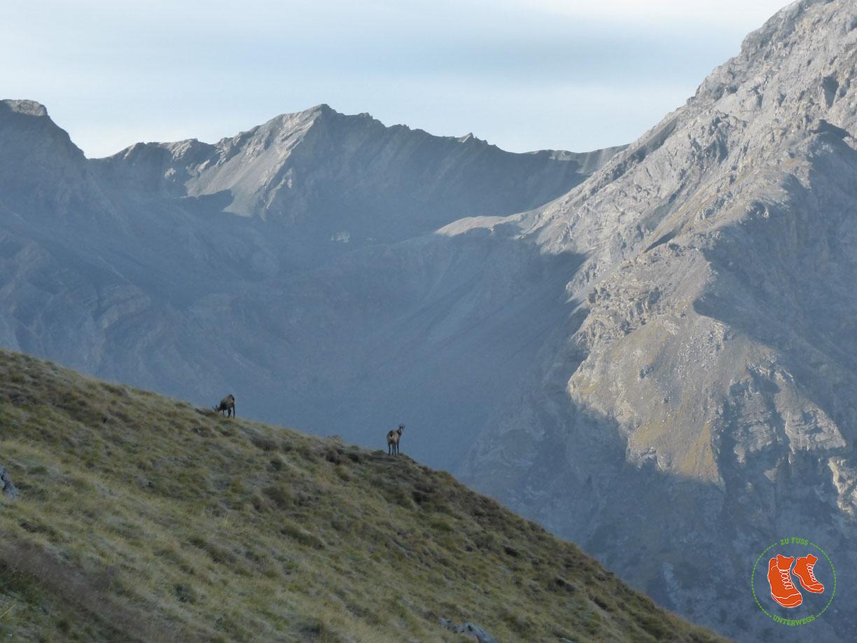 Schweizer Nationalpark - Tierbeobachtungen am Murtersattel