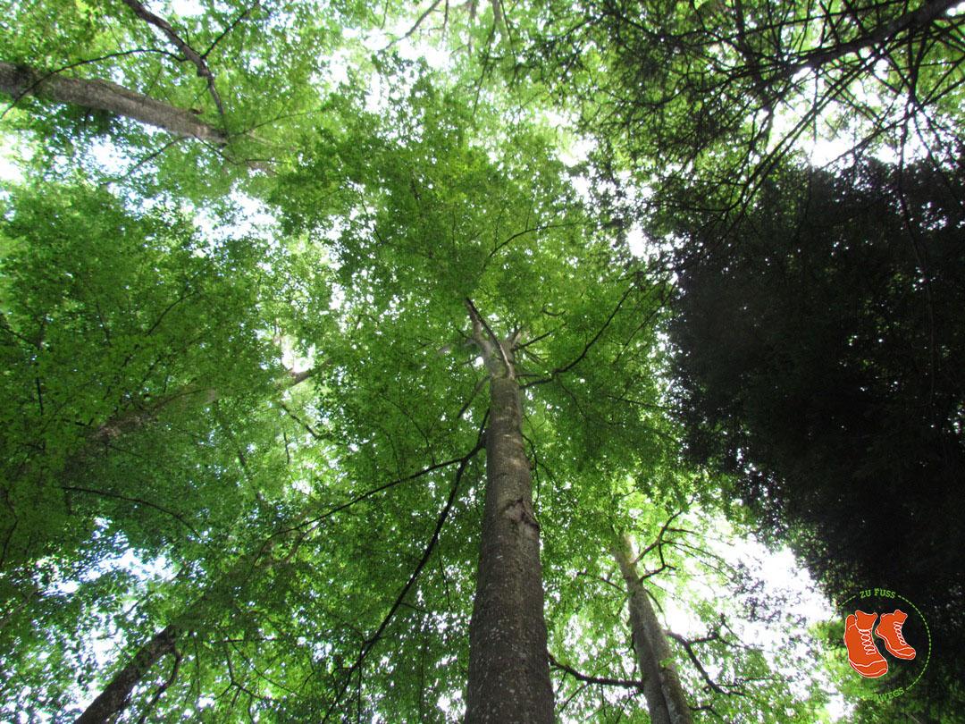 Waldbaden - was Bäume für deine Gesundheit tun