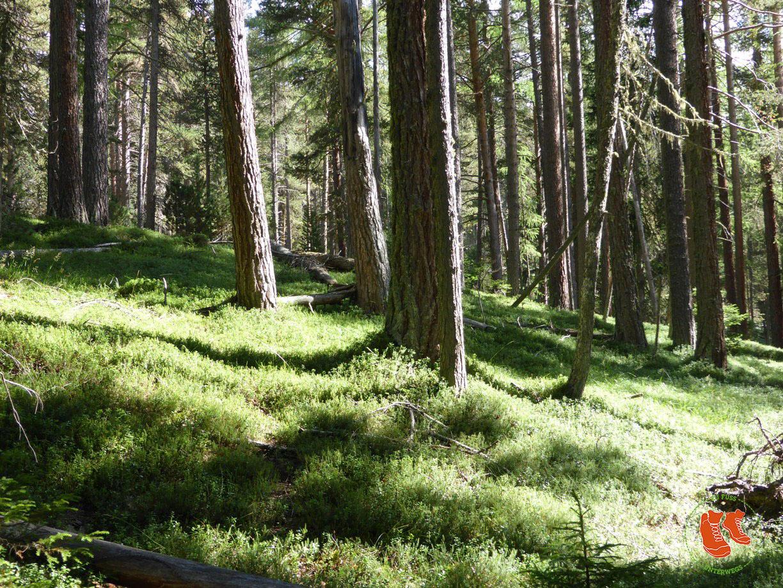 Waldbaden - die Kräft der Bäume