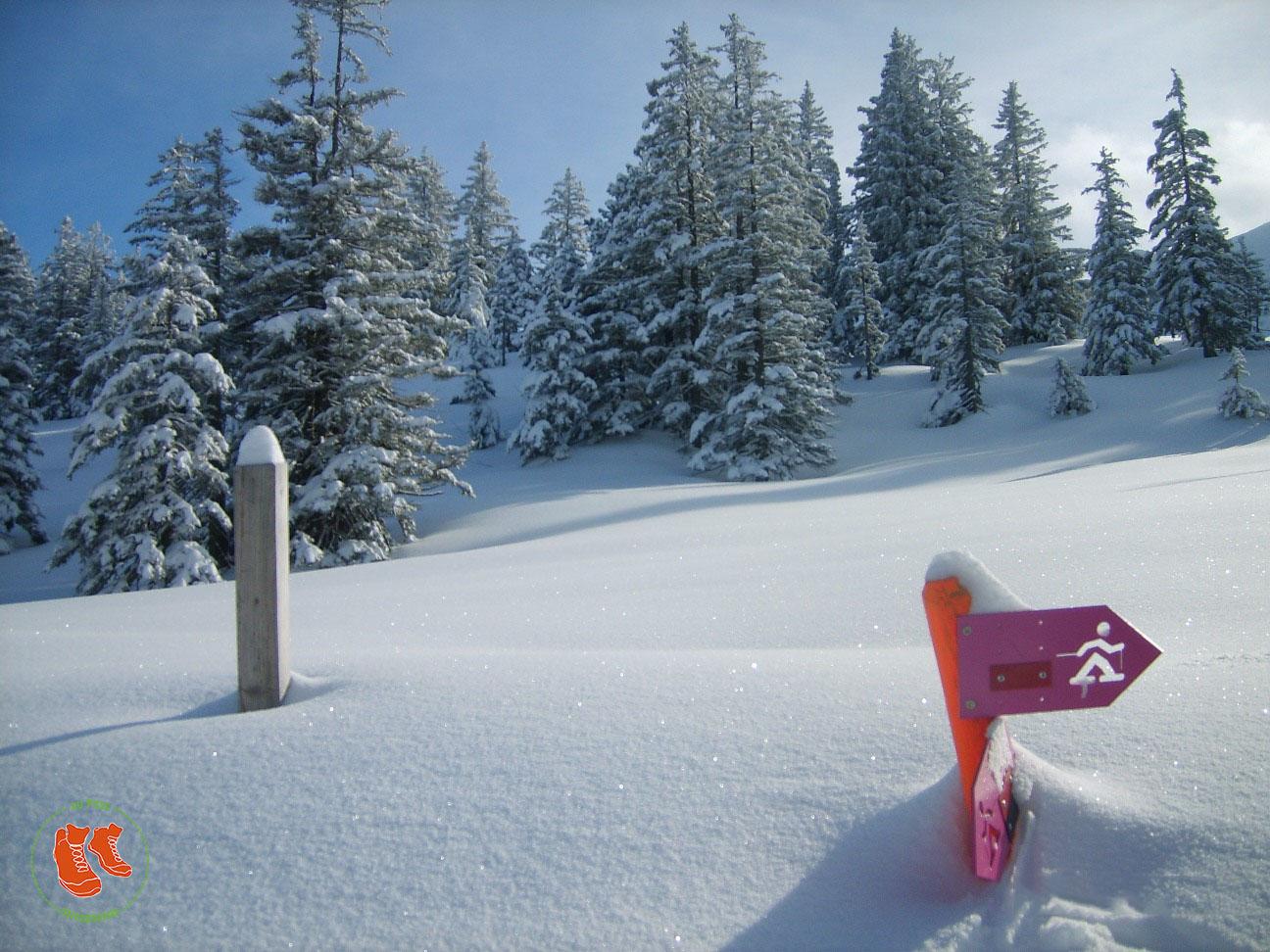 zuFussunterwegs: Eine Winterwanderung in frisch verschneiter Landschaft