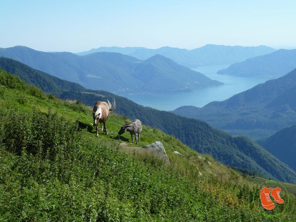 Zufussunterwegs 33 Zitate über Die Faszination Natur