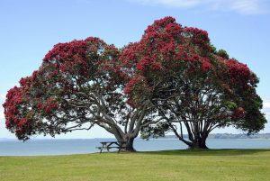 Mario Dieringer im Interview: Footpath of Life mit dem perfekten Symbol Baum