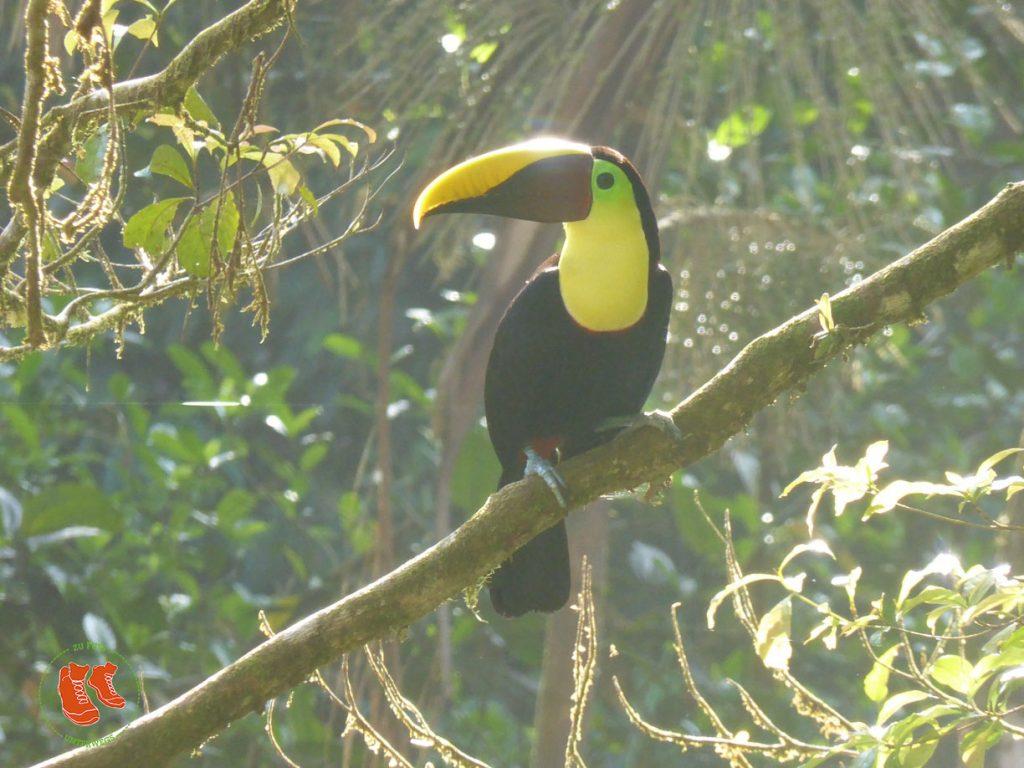 zuFussunterwegs in Costa Rica: Tiere entdecken