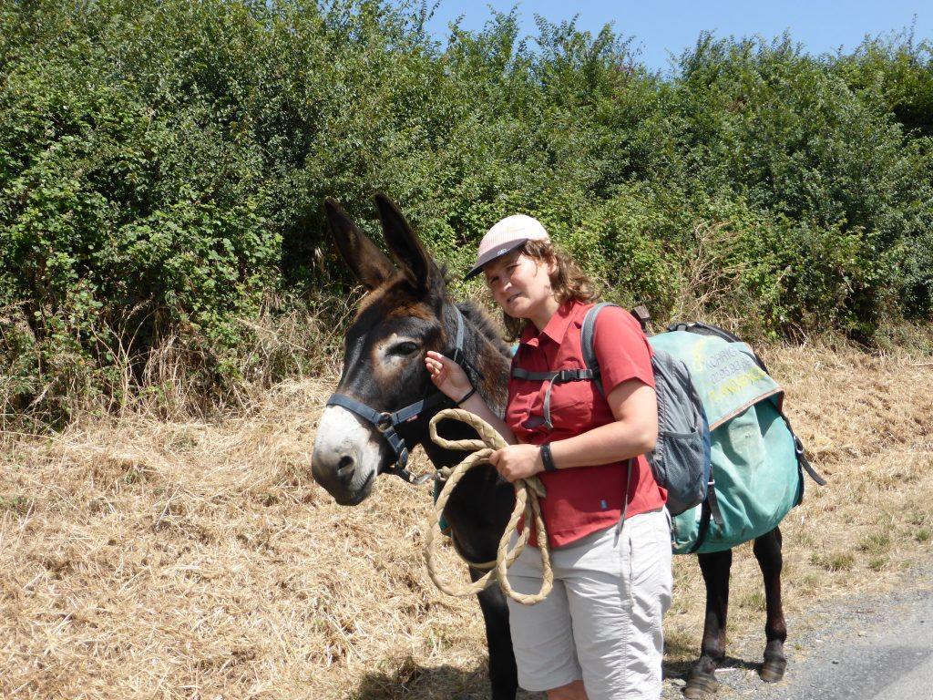 zuFussunterwegs_Eselwandern - Fressen, schauen, denken, laufen